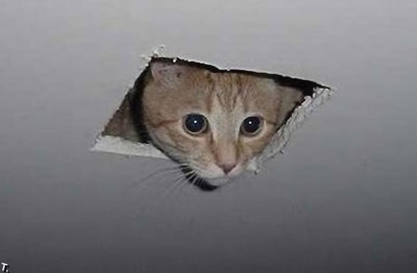 finding-ceiling-cat-on-tineye-22009-1267774064-48.jpg